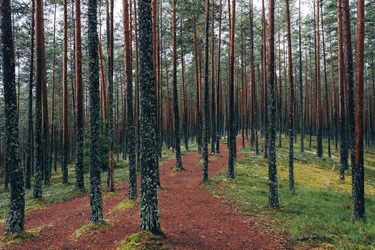 ป่าในแถบยุโรป