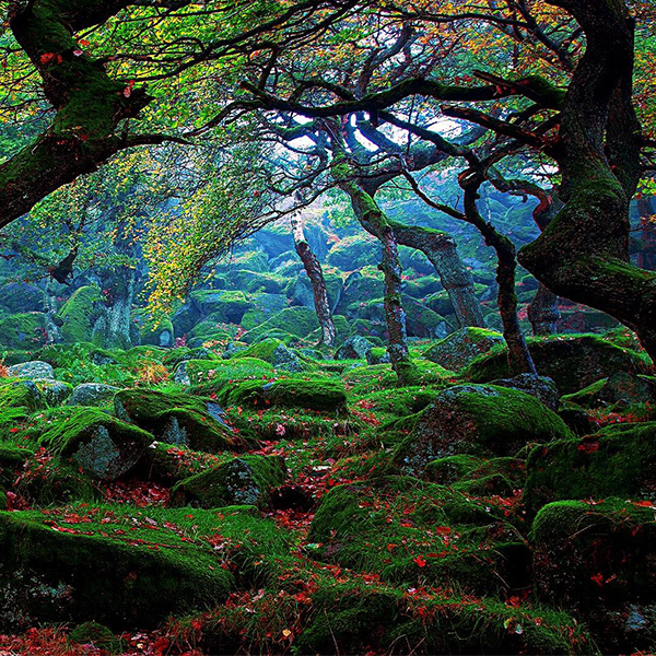 ธรรมาชาติที่สวยงาม