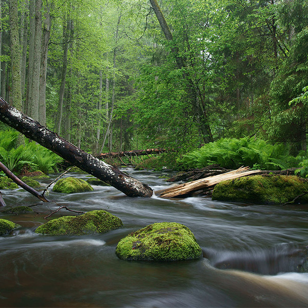 Water With Forest
