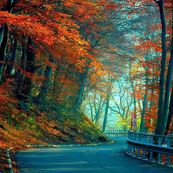 เส้นทางที่เต็มไปด้วยต้นไม้